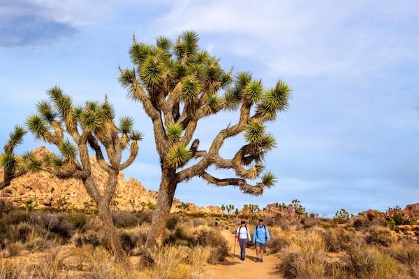 Joshua Tree Hikers