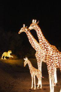 WildLights Animal Lanterns (1)