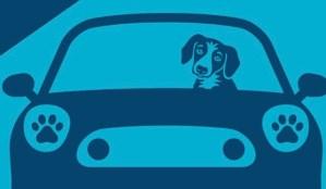 Test Drive Save Lives Animal Samaritans
