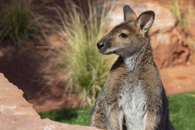 Australian Adventures Living Desert Zoo